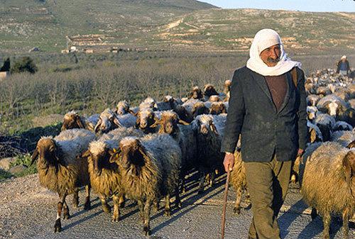 sheepherd.jpg