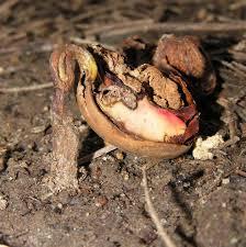 seed die.jpg