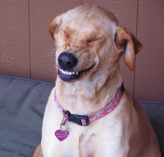 smile-dog.png_full.jpg