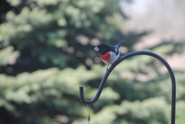 bird wire.jpg