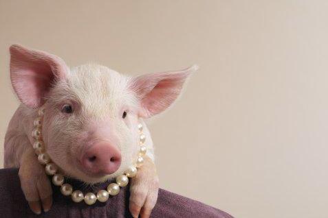 Pink Pig in Pearls.jpg