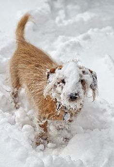 snowy dog.jpg